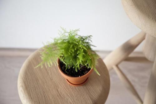 6 loài cây tuyệt đẹp giá rẻ cho nhà nhỏ thêm xinh - 1
