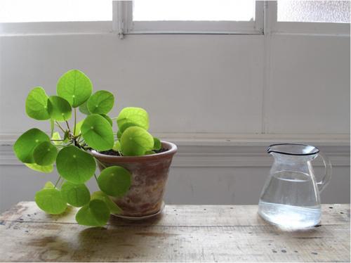 6 loài cây tuyệt đẹp giá rẻ cho nhà nhỏ thêm xinh - 2