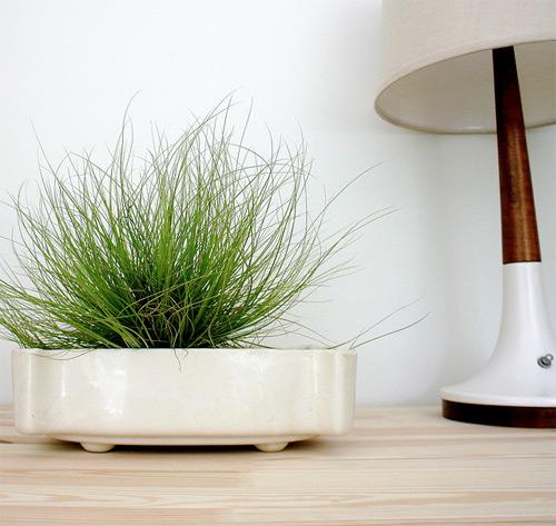 6 loài cây tuyệt đẹp giá rẻ cho nhà nhỏ thêm xinh - 6