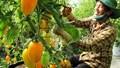 Giới đầu tư Nhật Bản quan tâm đặc biệt đến nông sản Việt
