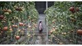 Nông nghiệp thế giới đang thay đổi do Trung Quốc