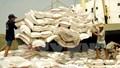 Philippines sẽ đấu thầu nhập khẩu 250.000 tấn gạo trong tháng 6