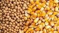 Giá nông sản và kim loại thế giới ngày 25/3/2020