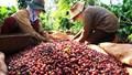 Quy mô thị trường cà phê Bắc Âu