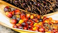 Chính phủ Ấn Độ lên kế hoạch thúc đẩy sản xuất dầu ăn trong nước