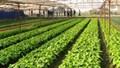 Đầu tư 3000 tỷ đồng làm nông nghiệp công nghệ cao tại Thái Bình