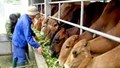 Tập đoàn TH đặc mục tiêu mở rộng đàn bò đến 137.000 con vào năm 2020