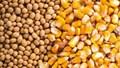 TT ngũ cốc thế giới ngày 10/05/2021: Giá ngô giảm sau hơn 1 tuần tăng giá