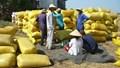 Thị trường lúa gạo: Diễn biến không theo thông lệ
