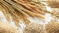 Giá lúa gạo hôm nay 23/7: Gạo nguyên liệu ổn định