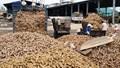 Nửa đầu năm 2021, xuất khẩu sắn và sản phẩm sắn thu về 611,69 triệu USD