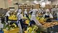 Hiệp định EVFTA sẽ là yếu tố hỗ trợ xuất khẩu hàng hóa sang thị trường Ba Lan