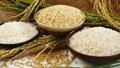 Giá lúa gạo hôm nay 18/10: Gạo nguyên liệu tăng