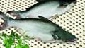 """26/10:Mời hội thảo: """"Đổi mới sản phẩm cá tra bền vững: Tiềm năng và công nghệ"""""""