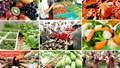Xuất khẩu nông sản: Rau quả lên ngôi; sắn, gạo tụt dốc