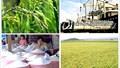 Giá gạo xuất khẩu tuần 24-30/11/2017