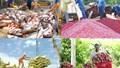 Tín đáng chú ý 14/11: Giá tôm giảm; sầu riêng, chanh, mít, thanh long tăng