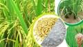 Giá lúa gạo ngày 27/5/2020 tăng