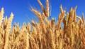 Các mặt hàng nông sản có thể tiếp tục phục hồi nhẹ trong phiên cuối tuần