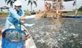 Gỡ rối cho ngành cá tra