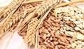 Thị trường TĂCN thế giới ngày 22/10/2020: Giá lúa mì giảm 4%