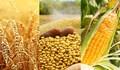 TT ngũ cốc thế giới ngày 09/04/2021: Thời tiết tại Mỹ khô hạn ảnh hưởng tới lúa mỳ vụ xuân