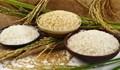Thị trường lúa gạo ngày 4/3: Giá gạo nguyên liệu và xuất khẩu giảm