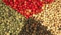 Giá hạt tiêu giảm do nguồn cung dồi dào