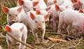 Giá lợn hơi ngày 18/9/2018 đồng loạt tăng trên thị trường cả nước