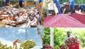 Tin đáng chú ý 15/10/2019: Mở cửa nhiều nông sản; Ốc hương, tôm hùm, xoài ứ đọng