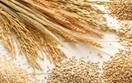 Báo cáo tháng 11/2020 của USDA về thị trường ngũ cốc thế giới