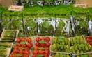 Vấn nạn thực phẩm bẩn: Ngoài nâng cao án phạt cần chú tâm đến thương hiệu