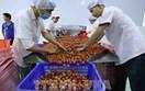 Xuất khẩu nông sản Việt - Bài 2: Tận dụng tối đa cơ hội