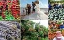 Báo cáo của USDA về sản lượng nông sản thế giới