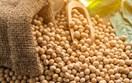 Nhóm nông sản đồng loạt giảm nhẹ sau báo cáo Tiến độ mùa vụ của Mỹ