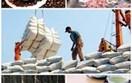Nông sản, thủy sản là mặt hàng chủ lực xuất khẩu đến năm 2030