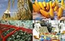 Xuất khẩu nông lâm thủy sản 2 tháng đầu năm ước đạt 6,1 tỷ USD