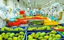 Hiệp định EVFTA yếu tố hỗ trợ để hàng hóa của Việt Nam tăng khả năng cạnh tranh tại thị trường Bỉ