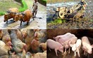 Cải cách nông nghiệp sẽ giúp cho Việt Nam trở thành nước có vị thế