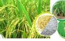 DN Úc có nhu cầu mua bột gạo, protein gạo và đồ dùng cho khách sạn