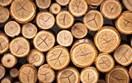 Giá gỗ xẻ tại CME sáng ngày 16/10/2017