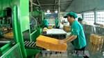 Nghịch lý ở ngành công nghiệp chế biến cao su