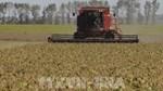 Brazil dự báo sản lượng ngũ cốc năm 2021 sẽ đạt kỷ lục mới