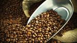 """Arabica liệu có mất vị thế """"vua cà phê"""" vào tay robusta?"""
