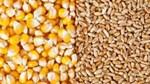 Giá nông sản và kim loại thế giới ngày 12/02/2020