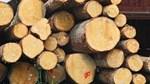 Indonesia và EU ký thoả thuận lịch sử về thương mại gỗ