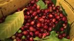 Thị trường cà phê, ca cao ngày 21/02/2017
