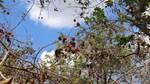 TT nông sản ngày 04/6: Vườn miền Tây tiêu điều do hạn mặn