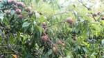 """Lào Cai chú trọng phát triển """"tam nông"""", tái cơ cấu nông nghiệp"""