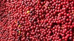 Giá cà phê xuất khẩu đạt đỉnh 4 năm